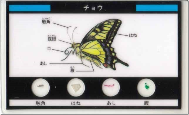 butterfly0a
